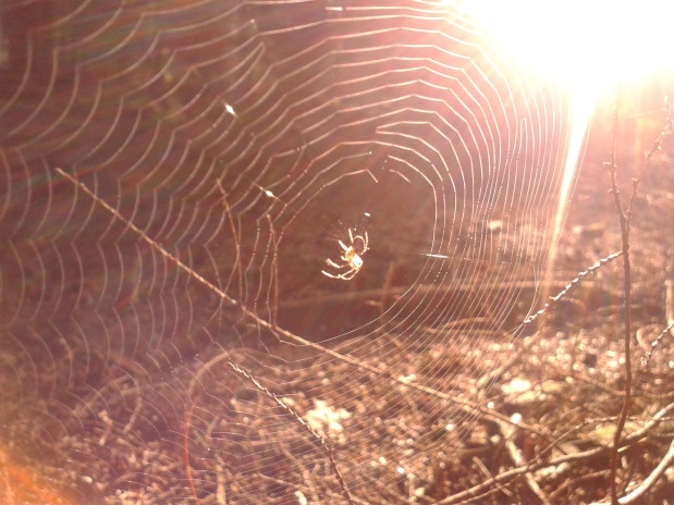 The Amazing Healing Power of Spiders Webs